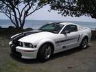 Mustang by the beach