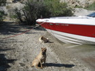 SEADOO ON COLORADO RIVER. BOAT ON LAKE MOHAVE.